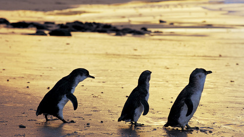 新西兰南北岛9日游