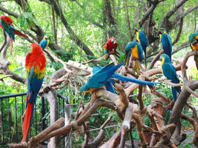 广州长隆长隆野生动物园-珠海海洋王国-欢乐世界双飞3