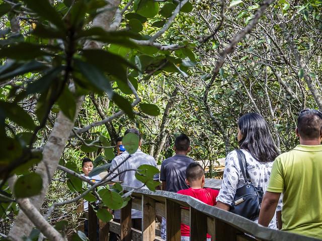 <【即时确认·闪电出票】迈阿密大沼泽地国家公园之旅【自由观光+汽船体验】>