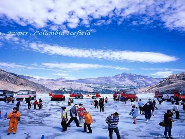 <加拿大卡尔加里哥伦比亚冰原一日游【经典冰原风景一日游】>