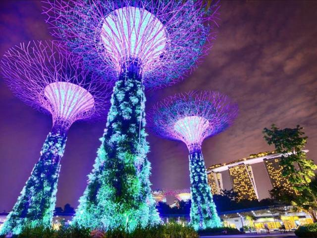 <新加坡滨海湾花园花穹+云雾林门票+OCBC走廊>