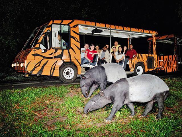 【夜间动物园】夜间野生动物园是世界上第一个专为夜间活动的动物而建造的动物园,坐落于40公顷次生雨林中,园内草木丛生,游客可步行或乘坐电瓶车游园。夜间野生动物园拥有130种动物,其中35%是濒危物种。犹如月光的特别照明下,可在宽阔的自然栖息地中观察这些夜行动物的行踪。 野生动物园以八个地理区域规划,游人可或乘坐游览列车沿2条环路进行45分钟的近距离观察。园中还有3条在雨林中蜿蜒的步行道,即渔猫小径、巨木森林小径和花豹小径,可以让游人靠近那些不容易从导览车上看到的动物,例如懒猴和眼镜猴。此外,园内也保存了新加
