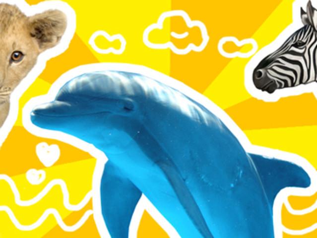 <海景餐厅中的爱马仕 毛里求斯快艇追海豚+七色土+山顶>餐厅+鸟公园一日游   惬意品牌专线 贴心专业中文导游,山顶餐厅法餐,优化路线组合,正规海豚船队