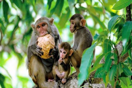 [春节]<三亚南湾猴岛1日游>猕猴童趣2至4人纯玩小包团、5座专属轿车酒店/机场上门接送、含门票、猴岛跨海索道、不足4人选升级方案