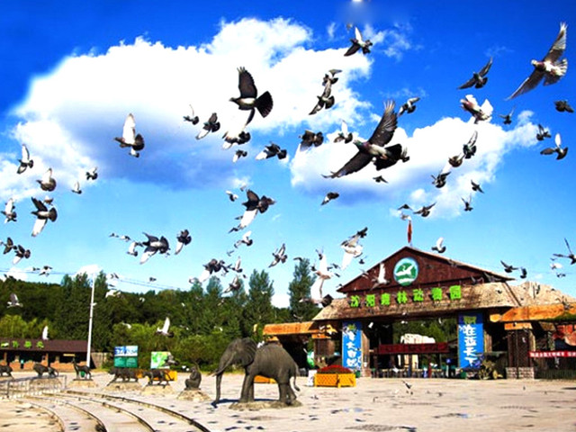 <沈陽森林動物園一日游【景區直簽,可選熊貓館,無二次消費服務保證】>