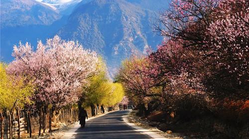 西藏林芝段雅鲁藏布江风光