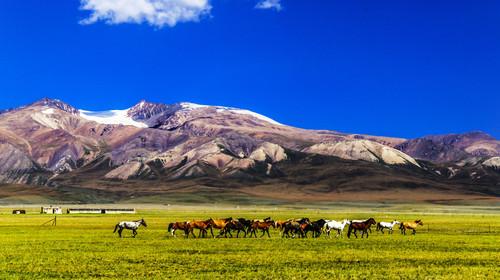 雪山下的骏马