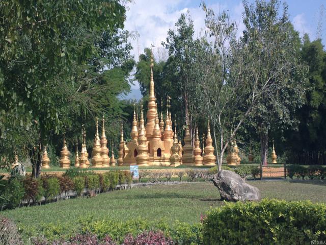 云南-西双版纳-西山国家森林-大渡岗万亩生态茶园-原始森林公园-打洛