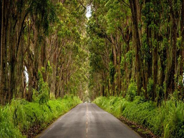 <夏威夷可爱岛威美亚峡谷西海岸一日游>(可爱岛精选)