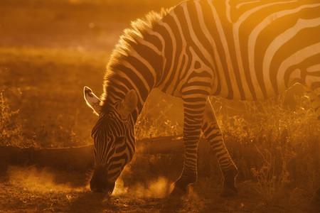 <非洲--埃塞俄比亚+肯尼亚+坦桑尼亚3国12日游>一价全含/全程领队陪同/马赛马拉国家恩戈罗恩戈罗纳瓦沙湖