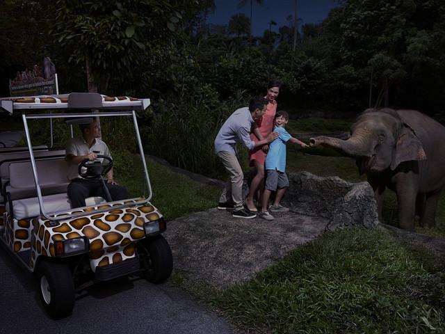 新加坡夜间动物园门票 春节特惠  立即出票 含园内电车 多时段可选 扫