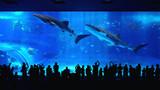日本冲绳海洋水族馆