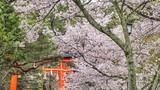Ujigami-jinja shrine in springtime. That standing stone