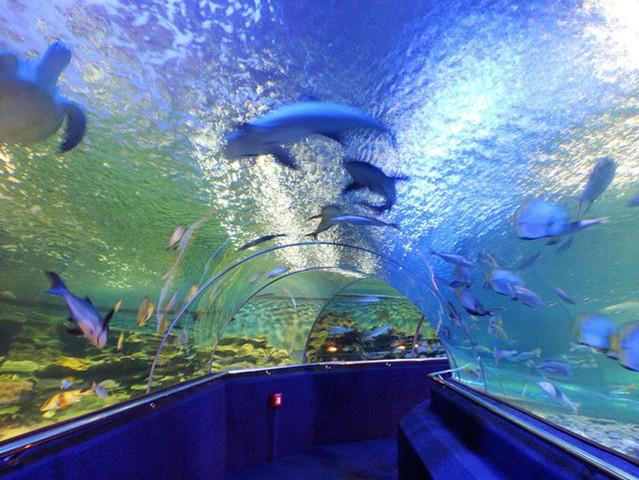壁纸 海底 海底世界 海洋馆 水族馆 639_480