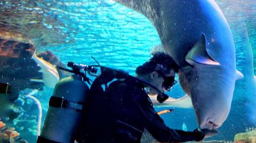 北京富国海底世界1日游