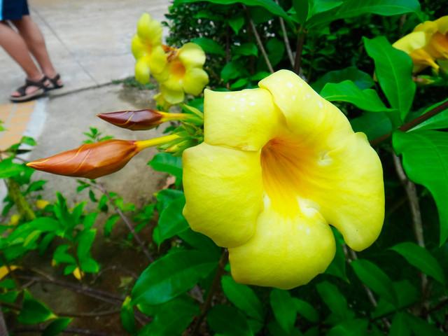 兴隆南药植物园