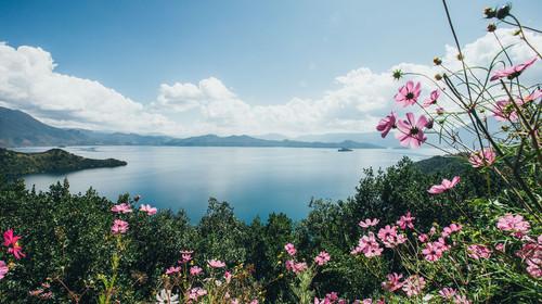 泸沽湖和格桑花