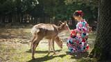 神鹿与少女
