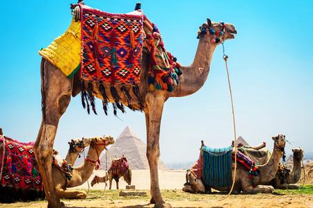 [春节]<南非+埃及+埃塞俄比亚14天游>上海起止ET/饕餮除夕晚餐/追寻人类之源/比林斯堡非洲五霸/探访古埃及/非洲特色餐/风情酒店