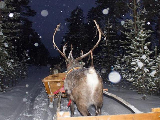 <芬兰 伊纳里 2小时乘坐驯鹿雪橇寻找北极光之旅(往返接送)>