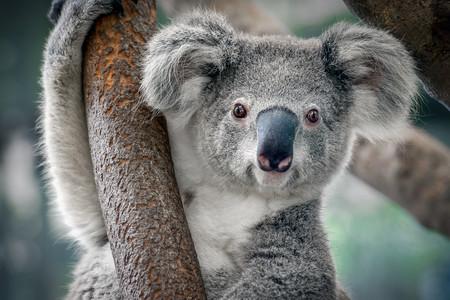 <澳大利亚-凯恩斯-黄金海岸-悉尼8日游>南航直飞广州往返,世遗蓝山,华纳电影世界,海港游船,天堂农庄,绿岛大堡礁