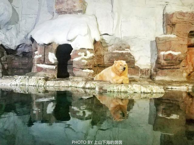 杭州长乔极地海洋公园,位于杭州市湘湖景区,是一座集极地qq怎么弄指定红包展示