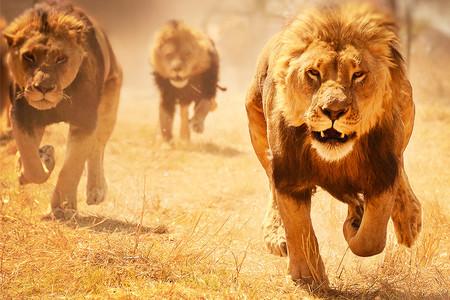 [五一]<肯尼亚10日游>全国限时免费联运,长沙直飞,全年发团,探访马赛村,乘船游纳瓦沙湖,阿布戴尔丛林徒步,乞力马扎罗,马赛马拉