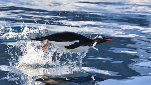 海精灵号-南极三岛-阿根廷