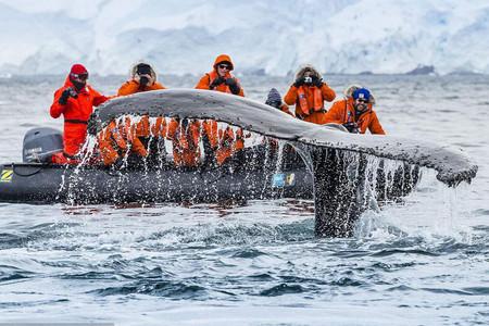 <夸克邮轮-海钻石号-阿根廷-南极四岛王企鹅摄影巡游22日游>北上港出发60万王企鹅群奇观华人包船登陆巡游时间长南极证书极地跳水