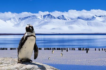 <南極三島26天22晚游>邂逅王企鵝、參與南極科研活動、小型郵輪、全員一次性登陸、用舒適*享、重新定義南極之旅