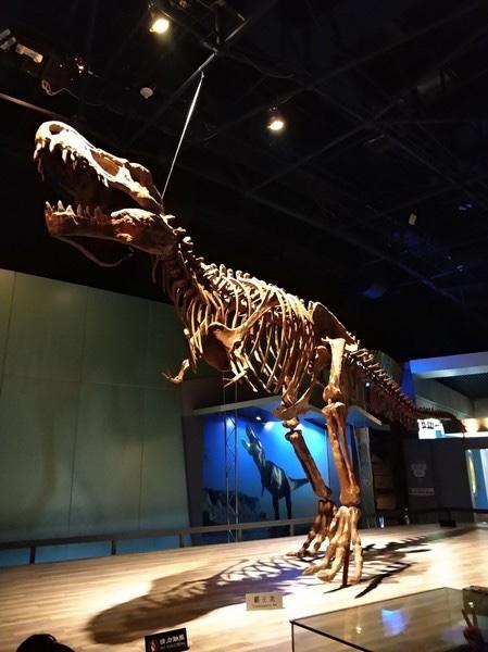 【砳宝在成长】动物园喂动物,恐龙园看恐龙-常州三日游