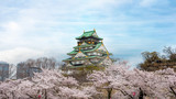 Osaka castle with cherry blossom in Osaka; Japan. Japan spring beautiful scene