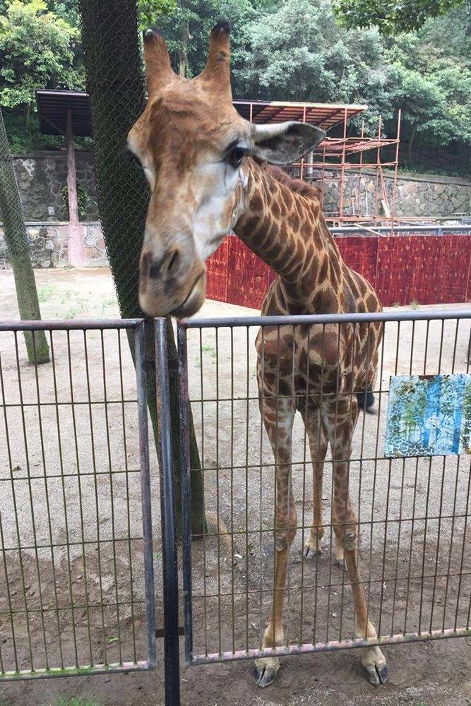 也是全国野生动物保护科普教育基地,浙江省科普教育基地.