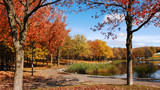 Fall in the park with very colorful trees, blue sky and a lake in Montreal at Mount Royal.