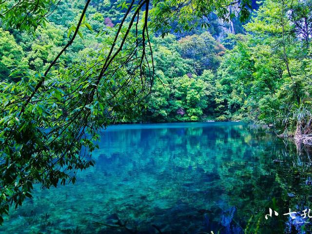 这种水,石,树相偎相依的奇景令人叹为观止,远远望去宛如漂在水上森林图片