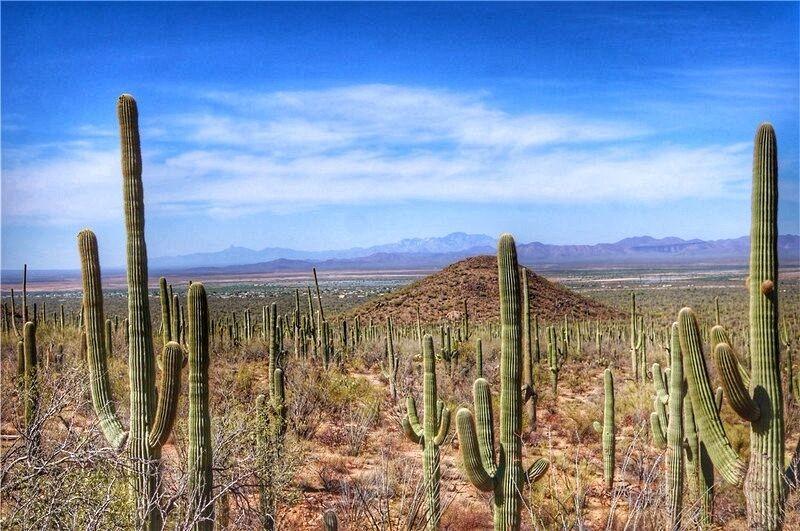 【首发】#鸿运必胜#亚利桑那图森,沙漠中的仙人掌帝国【多图】_图森游记