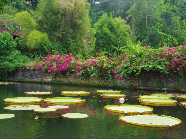巴厘岛天空之门-莲花池台-水上皇宫一日游