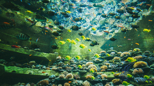 三亚·亚特兰蒂斯失落的空间水族馆