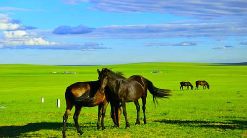 1H骑马穿越大美草原,草原射箭,访牧户,私家牧场儿童乐园,浪漫