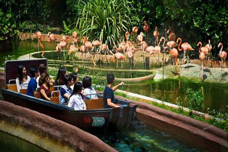 <新加坡动物园亲子1日游>与动物亲密接触河川生态园园夜间野生动物园(当地参团)