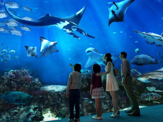 【当地玩乐】<新加坡S.E.A海洋馆门票>电子票扫码入园