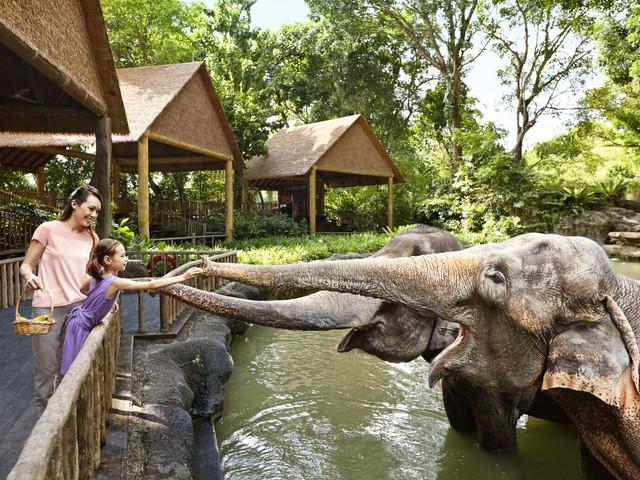 【当地玩乐】<新加坡日间动物园门票>电子门票,无需排队,含园内小火车