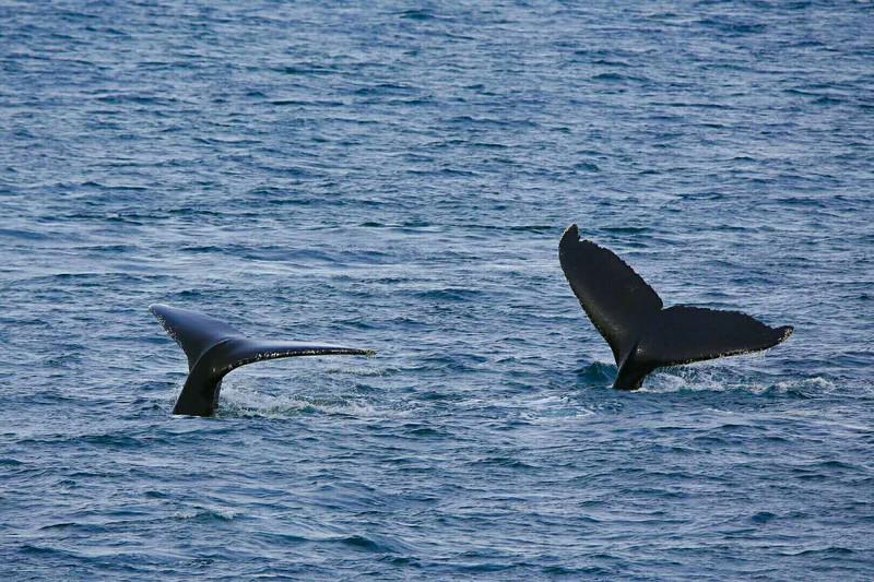 壁纸 动物 海洋动物 鲸鱼 桌面 800_533