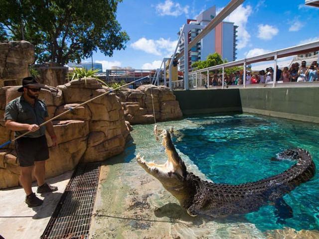 <达尔文野生动物园1.5小时喂鳄鱼刺激体验(含公园门票+专业向导)>