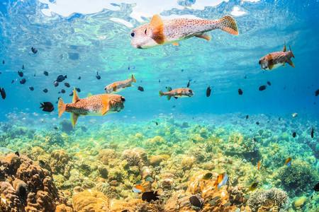<印尼美娜多5或6日游>直飞,全程海边酒店,蓝鲸岛,2次浮潜,布納肯海洋生态保护区,利广海底断层区,含京津接送