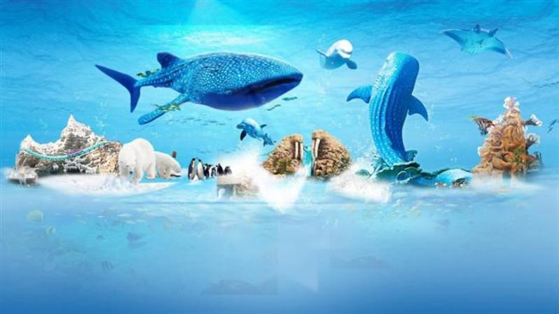 白鲸,北极熊和其它可爱动物见面 ☆ 玩:八大主题区域--海洋大街,海洋