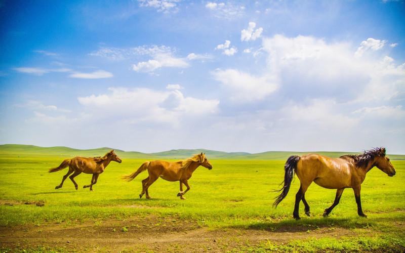 壁纸 草原 动物 马 骑马 桌面 800_500