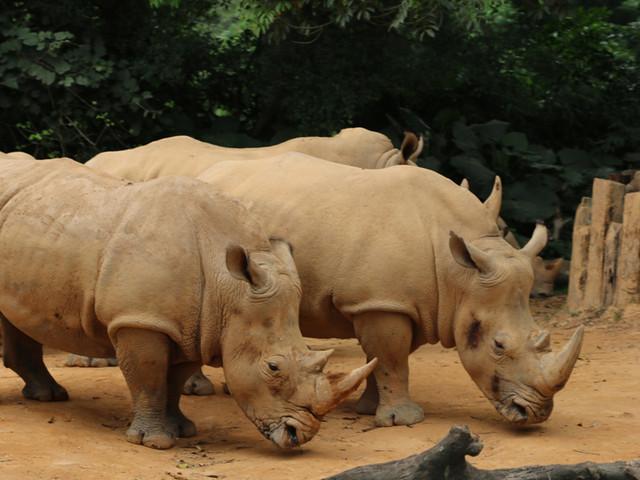 长隆野生动物园1