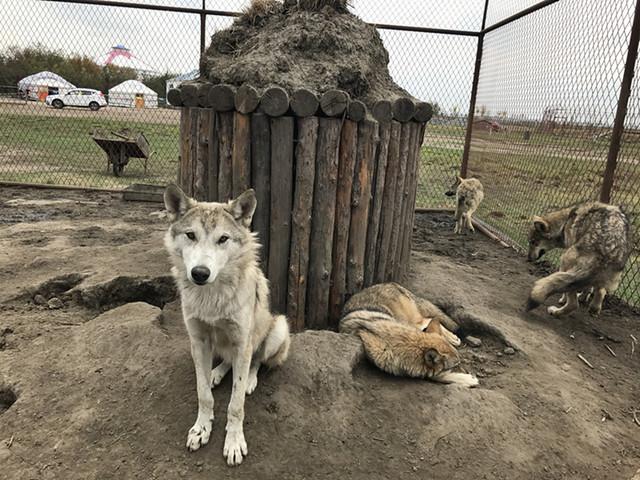 狼岛位于呼伦贝尔陈巴尔虎旗境内,总面积3000余亩,如此大的地域有如此