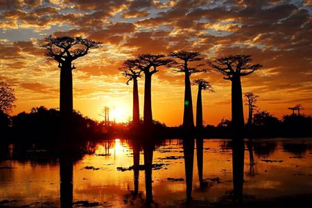 <马达加斯加+肯尼亚+坦桑尼亚+埃塞俄比亚19日16晚跟团游游>一价全含 全程7晚五星  6晚四星  3晚特色酒店
